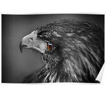 Hawk Eye 2 Poster