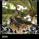 2010 Humming Birds by CLCreative