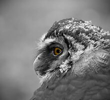 What you looking at?! by Jonathan Fletcher