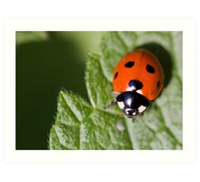 Little Lady Bug Art Print