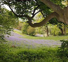 View through the trees - West Malvern by LisaRoberts