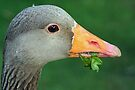 Greylag Goose by Debbie Ashe