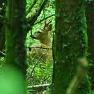 roe buck deer by Russell Couch