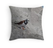 Ruddy Turnstone Throw Pillow