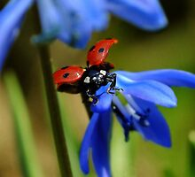 Have You Seen My Ladybird? by Aleksandra Kurczewska
