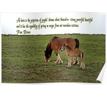 Clydesdale Baby 2 Poster