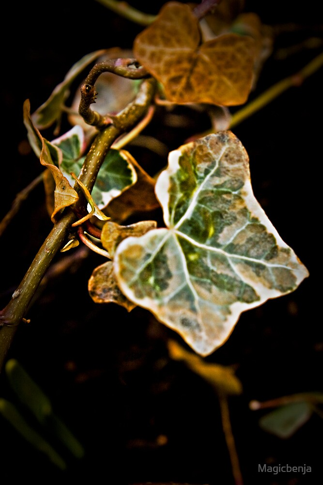 Leaf in the Forest by Magicbenja