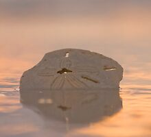 The Sand Dollar by Kody Little