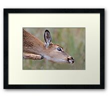 Scratch that Itch Framed Print
