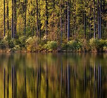 Lake Side Reflections by Michael Mill