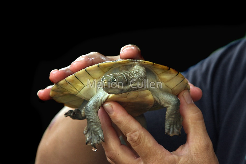 Turtle Love by Marion  Cullen