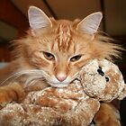 Orange Tabby Cat with His Stuffed Buddy by DebbieCHayes