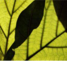Leaf Print Sticker