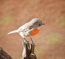 Scarlet Robin by Ron Co