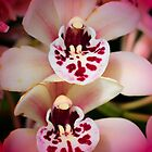 Orchids by Kathleen Struckle