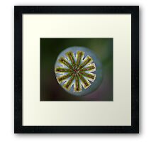 Green Poppy seed head Framed Print