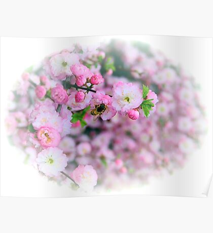 Bees & Blossoms III Poster