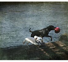 Play Date Photographic Print