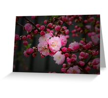 Spring Blossoms III Greeting Card