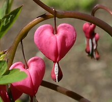 Dangling Hearts by Brent McMurry