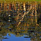 Reflections on Lotusbird Lagoon Lakefield National Park by Janette Rodgers