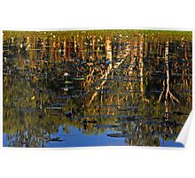 Reflections on Lotusbird Lagoon Lakefield National Park Poster