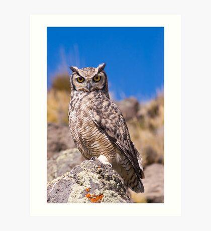 Great horned owl. Art Print