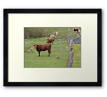 Outstanding in his Field Framed Print