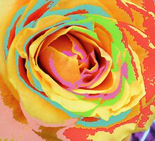Rose Multicolors. by Vitta