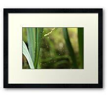 Spiders Lair Framed Print