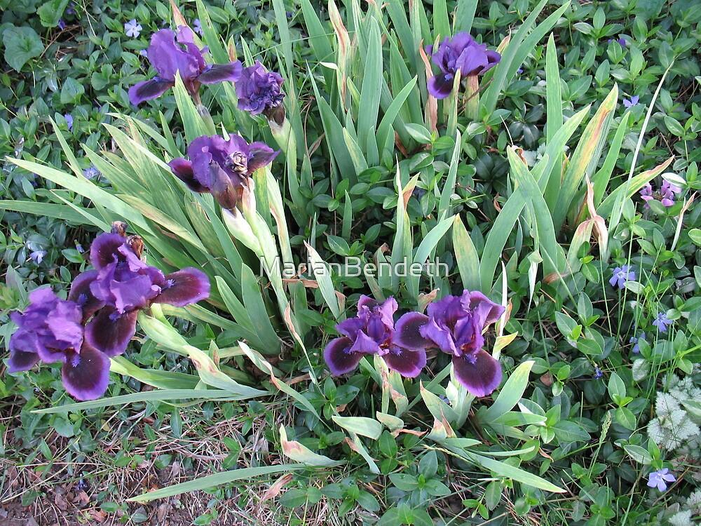 Purple Iris Patch of Glory by MarianBendeth