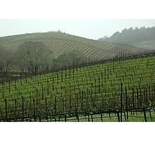 Wine Country Photographic Print