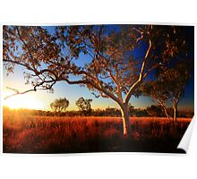 bush country Poster