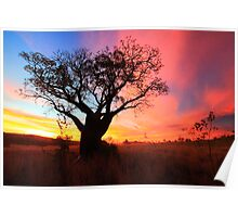 Boab sunset Poster