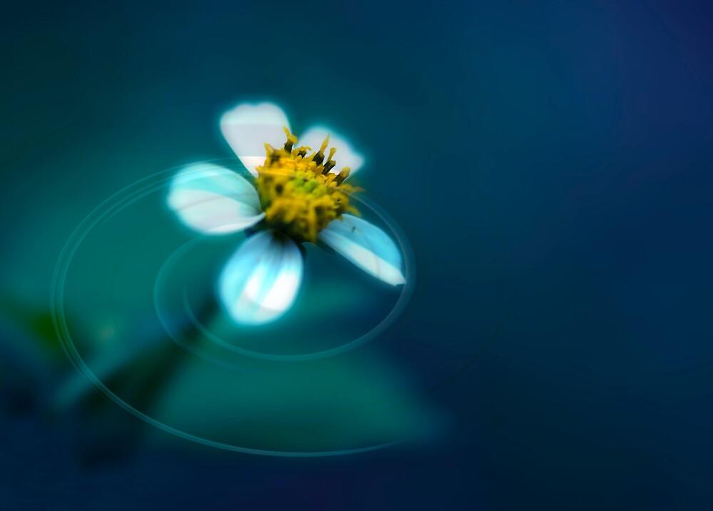 White Daisy by Jenny Dean