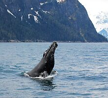 Humpback Wale from Kenai Peninsula by Barbara Burkhardt