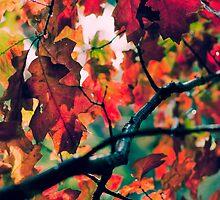 Autumn by Aaron Radford