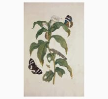 Metamorphosis insectorum surinamensium Maria Sibylla Merian 1705 0117 Insects of Surinam_jpg Kids Tee