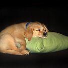 Puppy Dreams by Marion  Cullen
