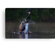 Pisces Rising - Common loon with fish Canvas Print