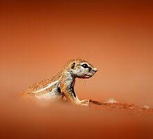 Ground squirrel on red desert sand by Johan Swanepoel