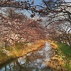 Sakura, As It Was. by J J  Everson