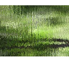 Green Bayou Photographic Print