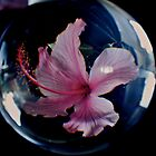 Hibiscus Ball. by Dejezza