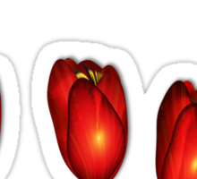 Tulips from Holland Sticker