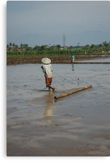 planting paddies by bayu harsa