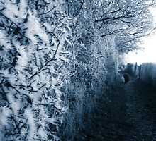 Frosty Path by Vicki Spindler (VHS Photography)