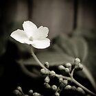 Delicate by Jayne Le Mee