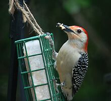 ~Red-bellied Woodpecker~ by Kelly Normandeau