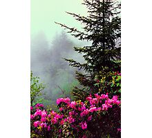 RHODODENDRON ON THE BLUE RIDGE PARKWAY Photographic Print
